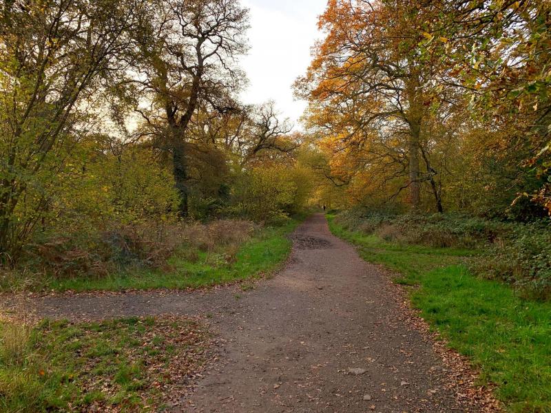 Bookham-commons-woodlands-path