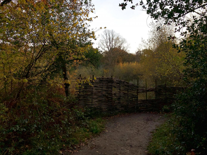 bird-viewing-point-bookham-commons