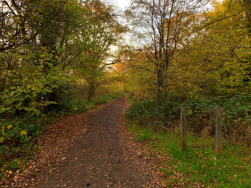 bookham-commons-path-leading-to-bird-hide