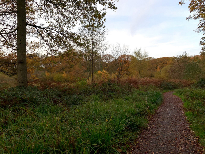 isle-of-wight-pond-bookham-commons
