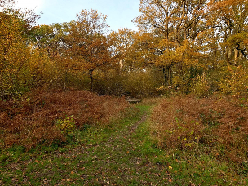 picnic-bench-near-lower-hollows-pond-bookham-commons