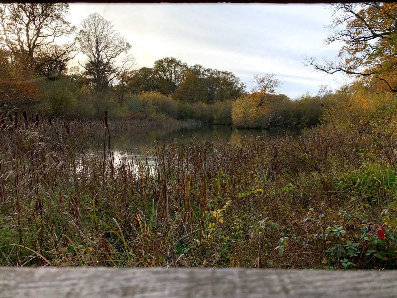 upper-eastern-pond-bookham-commons