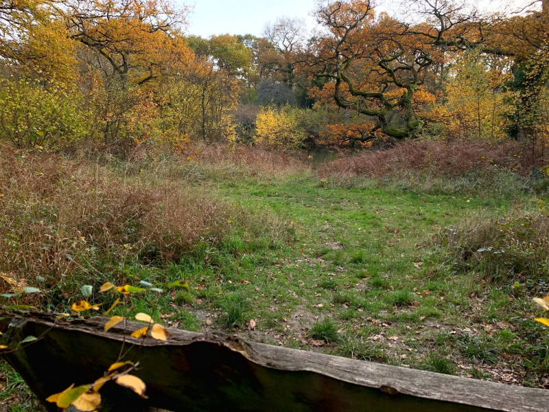 view-of-pond-from-picnic-bench-bookham-commons