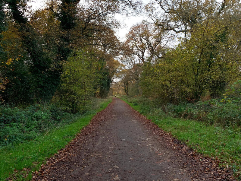 walk-back-to-tunnel-car-park-bookham-commons-2