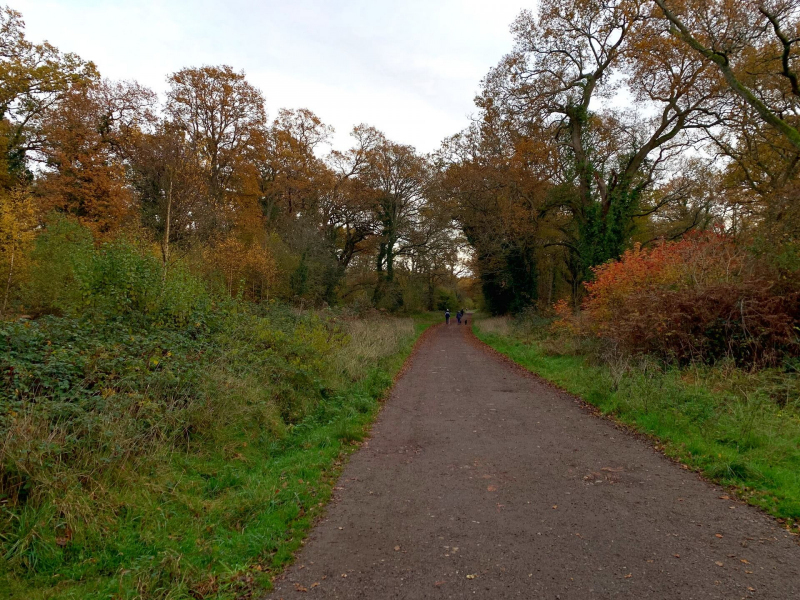 walk-back-to-tunnel-car-park-bookham-commons
