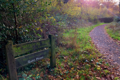 approach-to-bird-hide-bookham-commons