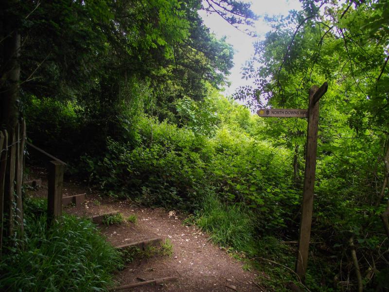 Box-hill-path-northdown-ways