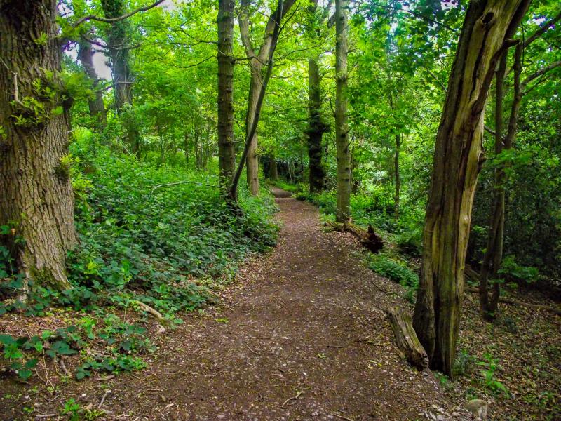 Box-hill-path-trees-walk
