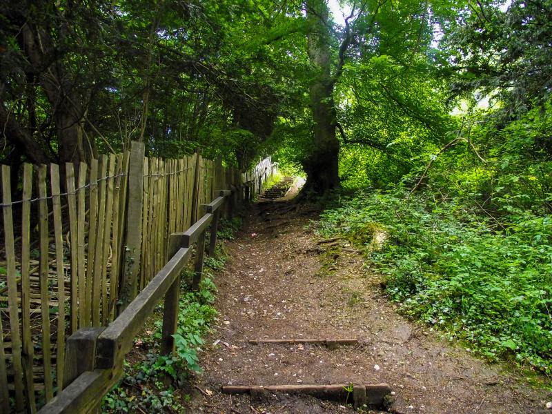 Box-hill-steps-walk