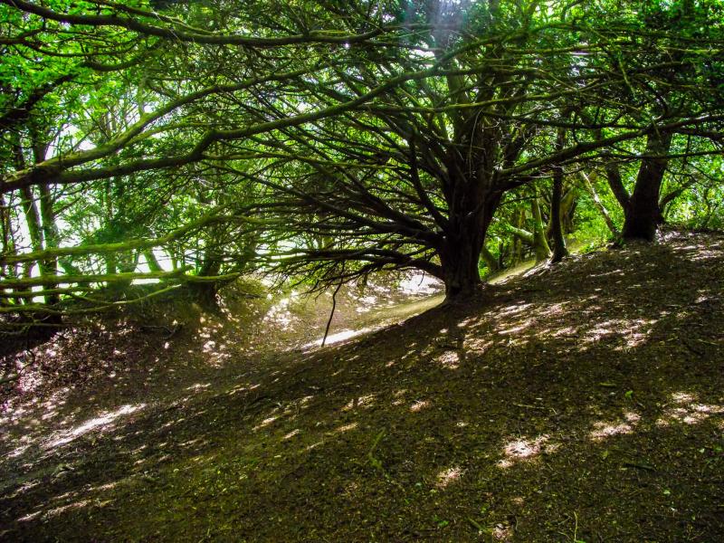 Box-hill-sun-light-through-trees