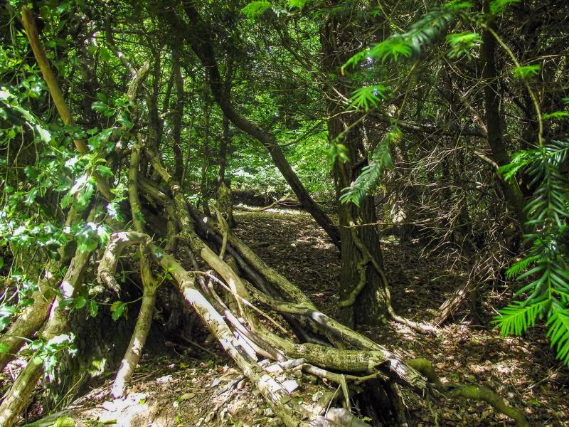 Box-hill-trees