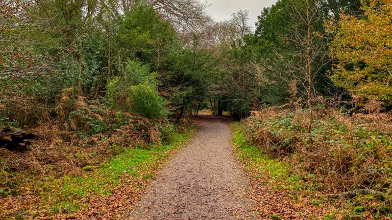 Box-hill-walk-autumn-day-2
