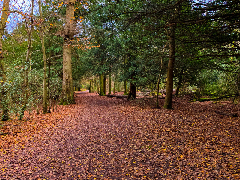 Box-hill-walk-on-a-autumn-day