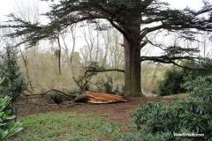 Fallen-tree-in-Attingham-Park