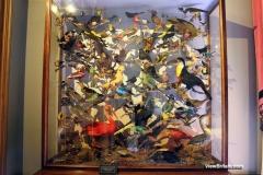 Stuffed-birds-showcase-in-Attingham-Park