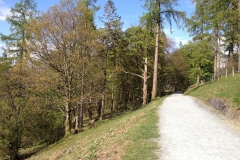 Linear-straight-path-along-the-east-side-of-Tarn-Hows-lake