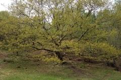 a-beautiful-tree-at-tarn-hows-lake-walk