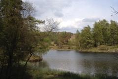 tarn-hows-lake-view