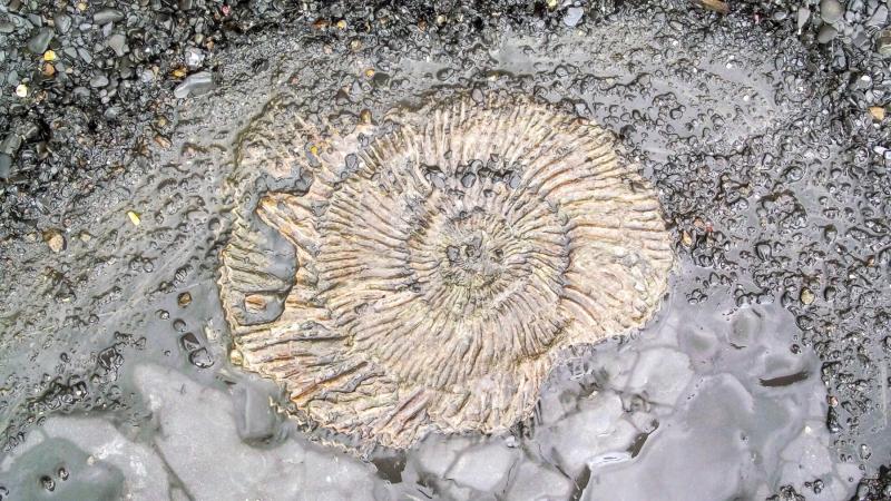 Kimmeridge_bay-fossil-inside-rock
