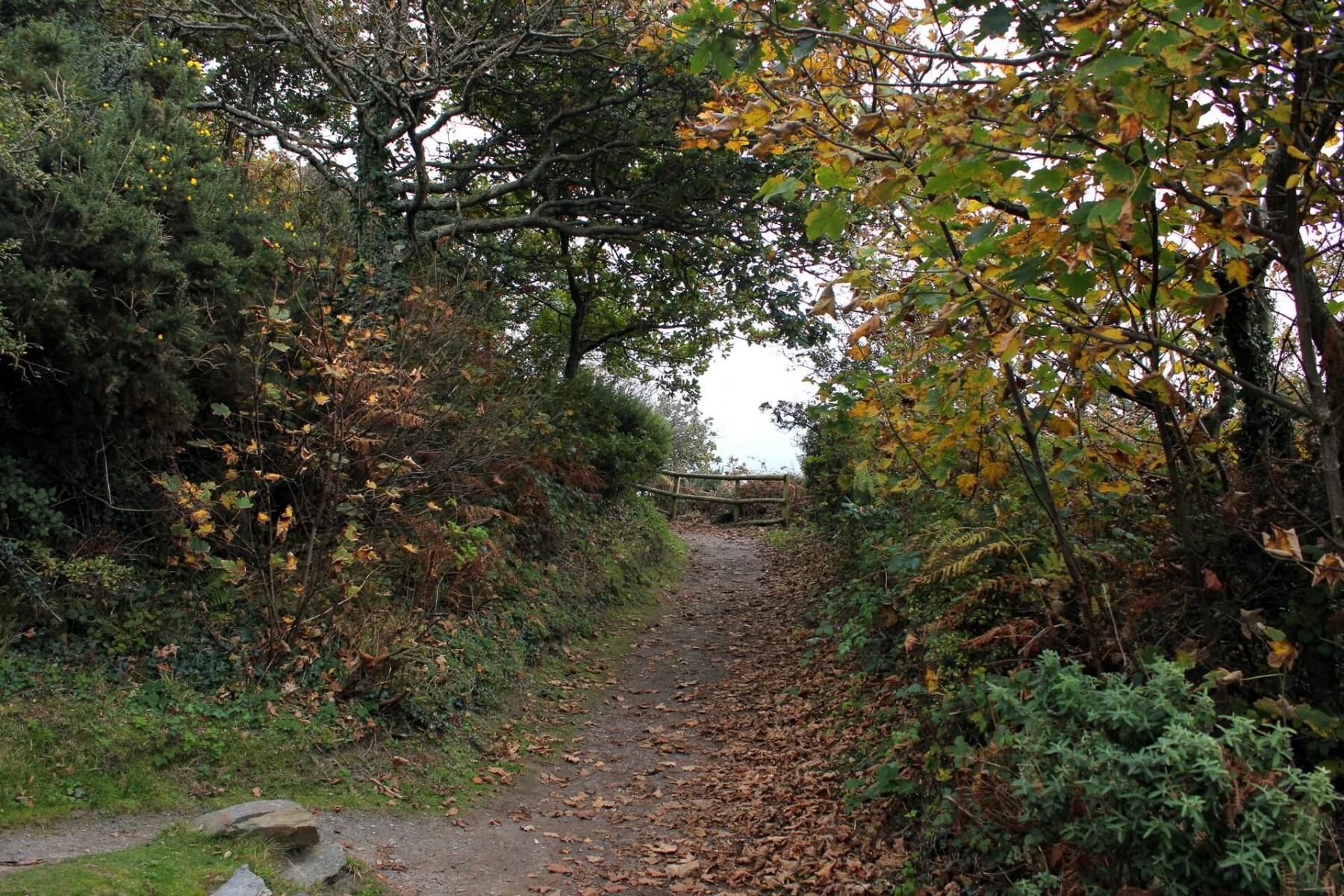portmeirion-woodland-walk-1