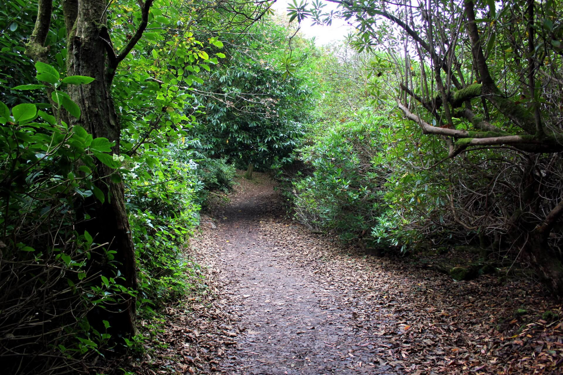 portmeirion-woodland-walk-2