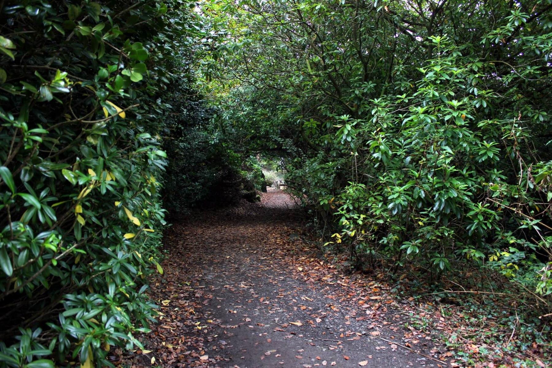 portmeirion-woodland-walk-3