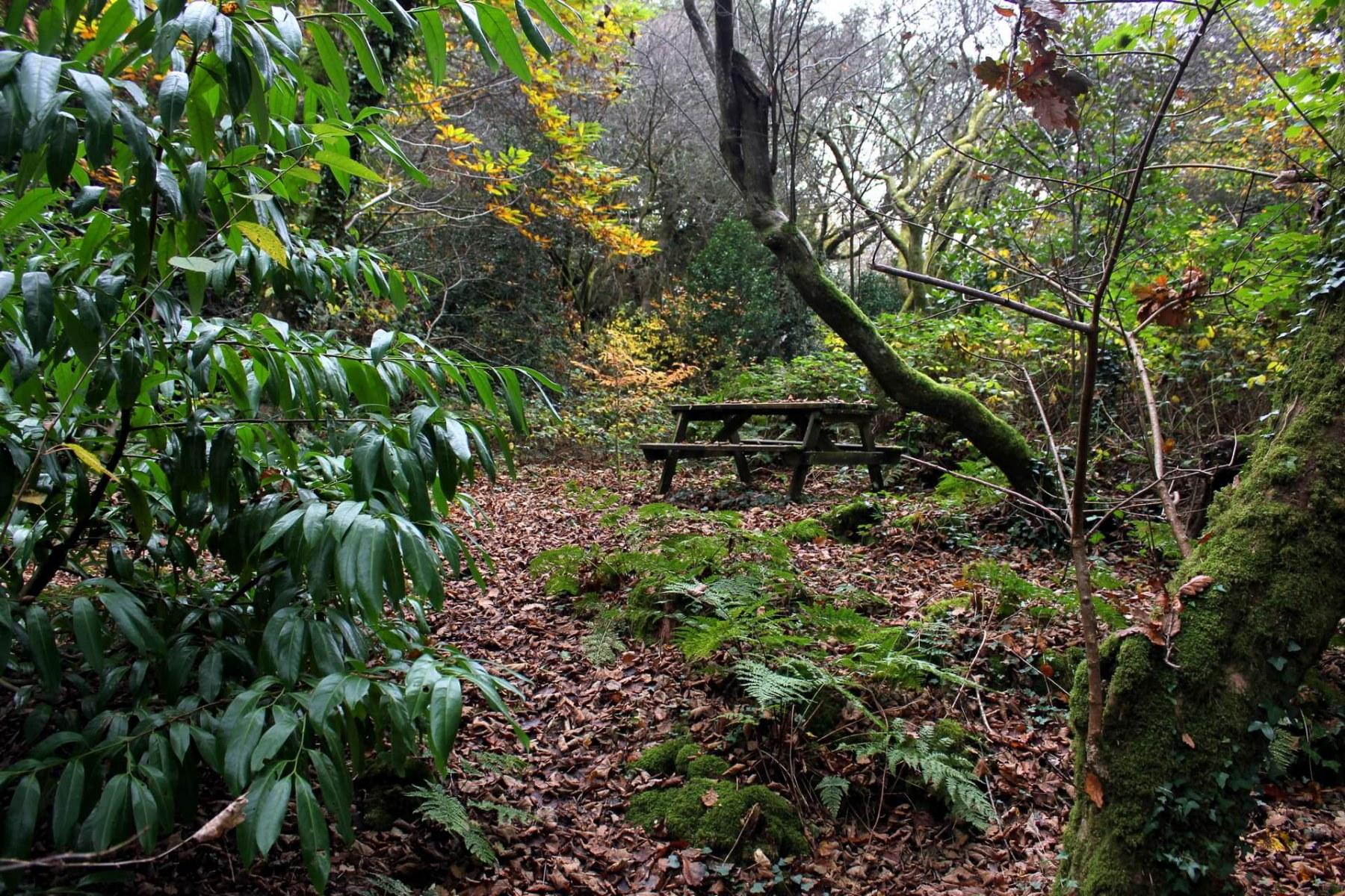 portmeirion-woodland-walk-picnic-bench
