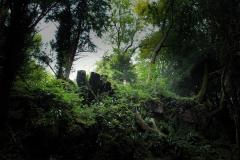 Puzzlewood-ancient-trees