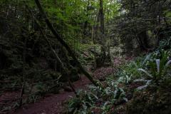 Puzzlewood-meandering-walks