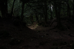 Puzzlewood-mysterious-paths-and-walks