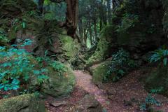 Puzzlewood-narrow-walkways-between-rocks