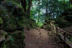 Puzzlewood-paths-2