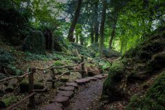 Puzzlewood-paths-3