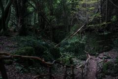 Puzzlewood-paths-woodland-walk