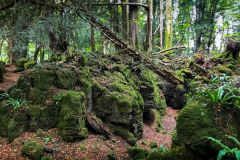 Puzzlewood - Forest of Dean