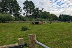 Puzzlewood-shetlands-pony-enclosure