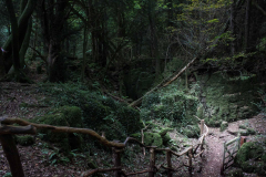 Puzzlewood-sloping-path