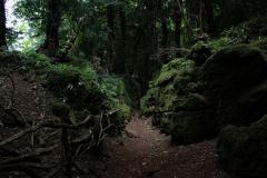 Puzzlewood-sun-ray-through-dense-trees