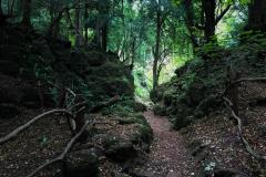Puzzlewood-walk-paths