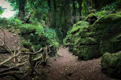 Puzzlewood-walk-surrounded-by-rocks