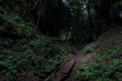 Puzzlewood-walks-6