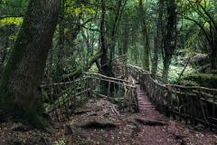 Puzzlewood-wooden-bridge