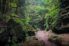 Serene-walks-puzzlewood1