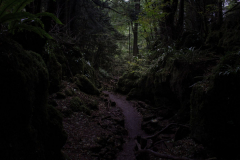 mysterious-paths-puzzlewood-forest-of-dean