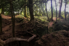 mysterious-sceneries-puzzlewood