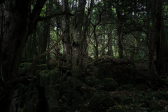 mysterious-woodland-walk-puzzlewood-2