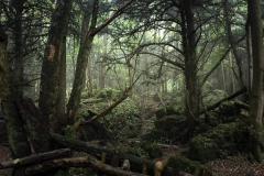 puzzlewood-mysterious-atmosphere-in-the-rain1