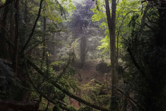 puzzlewood-mysterious-atmosphere-in-the-rain3