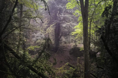 puzzlewood-mysterious-atmosphere-in-the-rain4