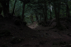 mysterious-walks-in-puzzlewood